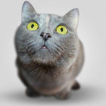 Jei katės galėtų kalbėti, jos nekalbėtų