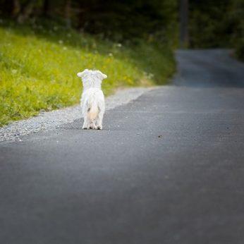 Ką daryti, jei radote pasiklydusį gyvūną