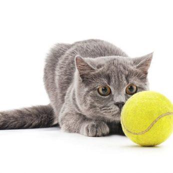 Katino susidūrimas su kamuoliuku privertė kvatotis milijoną