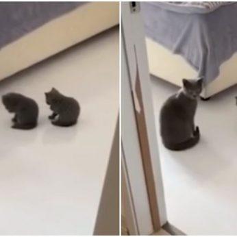 Mielame vaizdo įraše – mamos nurodymus vykdantys ir jos judesius kopijuojantys kačiukai