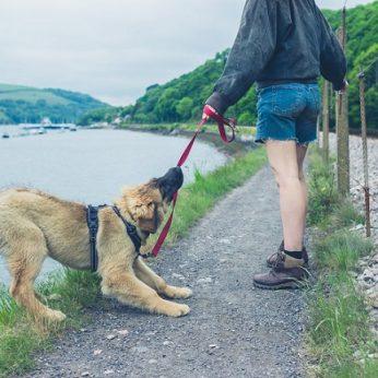Perspėjo vedžiojančius šunis: viena dažna klaida gresia sunkiomis traumomis