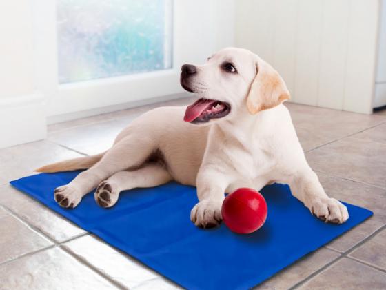 Plaukimo liemenės ir vėsinantys kilimėliai šunims