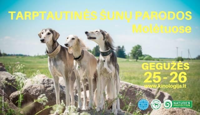 Tarptautinės šunų parodos Molėtuose. 2 CACIB in Molėtai