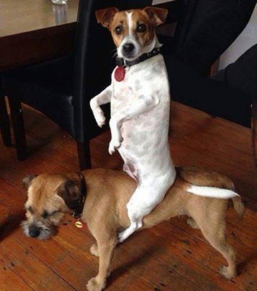 komiškose situacijose užklupti šunys priverčia kvatotis