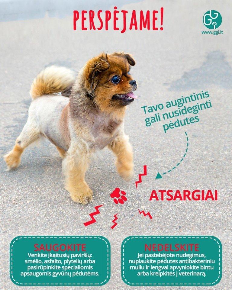 Ypač karštas asfaltas gali paveikti šuns pėdas. ggi.lt nuotr.