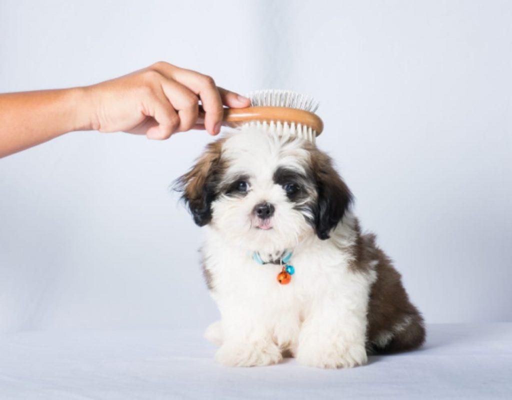 Šunų kirpykla Petmix Domeikavoje