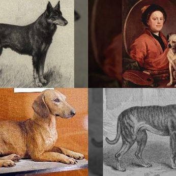 Šunų veislių pokyčiai bėgant metams pribloškia – atrodė visai kitaip