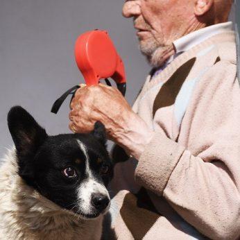 Agresyvus ir netradicinės orientacijos šuo terorizavo linkuviškę