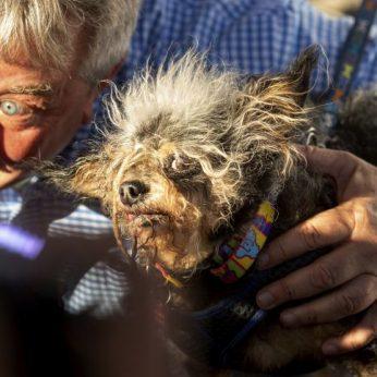 Kalifornijoje išrinktas bjauriausias pasaulio šuo