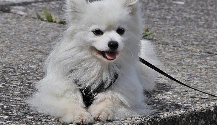 Saugokite savo į lauką išvestus šunis gresia dideli nemalonumai