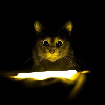 Štai kodėl jūsų katė siautėja naktį: keli paprasti būdai padės ją suvaldyti