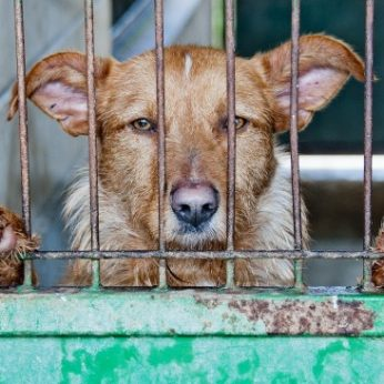 12 beglobių šunų ir tik 4 dienos iki eutanazijos