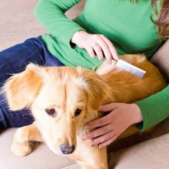 Atsakymas į klausimą, kaip dažnai šukuoti šunį