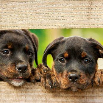 Išsiaiškinti šunų maisto prekių ženklai siejami su širdžių ligomis
