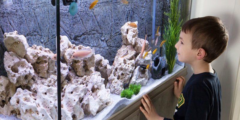 Išvažiuojate atostogauti – 4 patarimai, kaip pasirūpinti akvariumo žuvytėmis