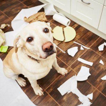 Keli patarimai padės suvaldyti namus siaubiantį šunį