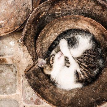 Klaipėdoje katinas jau dvi savaites gyvena po žeme: tikriausiai buvo užkastas tvarkant šiluminius vamzdžius