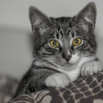 Moterų konfliktas dėl kačiuko baigėsi netikėtai
