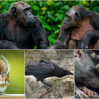 Protingiausi gyvūnai pasaulyje – kai kurie jus tikrai nustebins