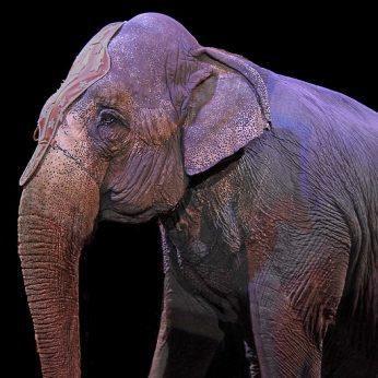 Už cirkus be gyvūnų