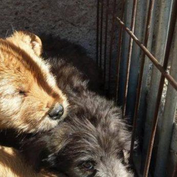 """VšĮ """"Penkta koja"""" priversta stabdyti veiklą: nebegalime padėti nė vienam šuniui, ir tai yra galas"""