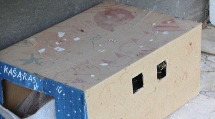 Įrengė kačių viešbutį po balkonu taisyklės sau, o gyvenimiška praktika sau