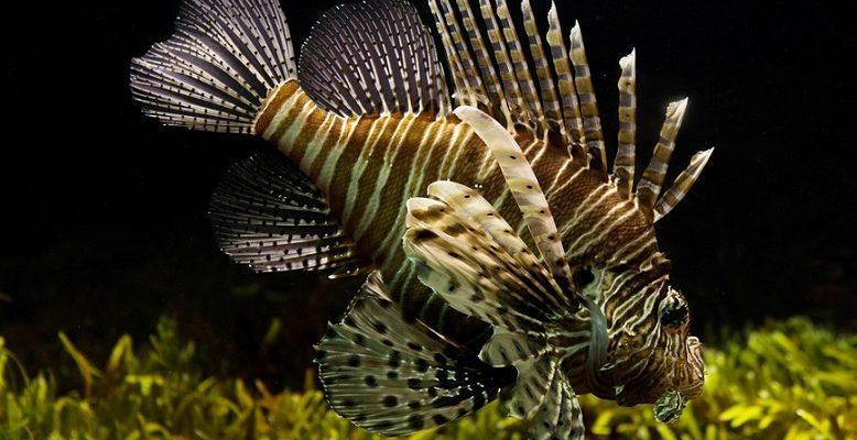 Akvariumų terapija: mokslininkai ištyrė, kiek iš tiesų tai veikia
