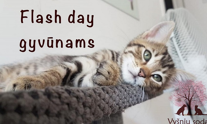 Flash day gyvūnams