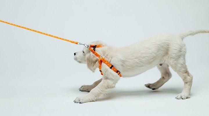 Gal net neįtarėte, kad šie jūsų įpročiai erzina šunis