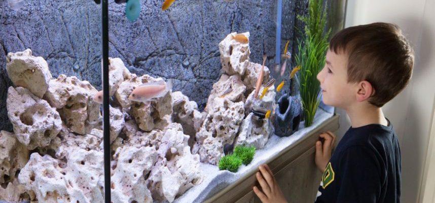 Išvažiuojate atostogauti? 4 patarimai, kaip pasirūpinti akvariumo žuvytėmis