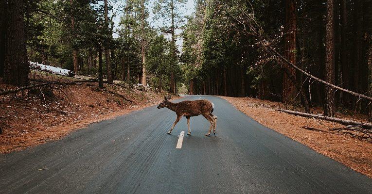 Kas pasirūpina avarijose sužeistais gyvūnais?