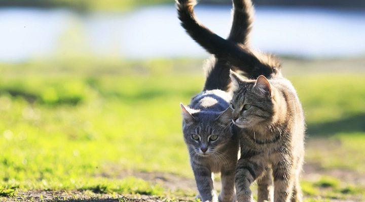 Kodėl jūsų katė jums atkišo pasturgalį?