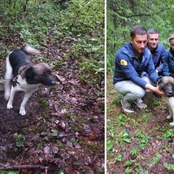 Nesuvokiamas žiaurumas: batraiščiu prie medžio pririštą šunį paliko mirti