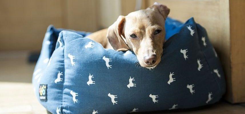 Net I. Laursą sudominęs startuolis – alternatyva gyvūnų viešbučiui
