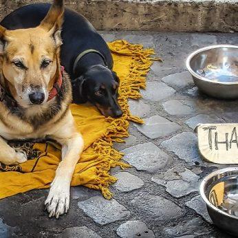 Nyderlandai tampa pirmoji benamių šunų problemą išsprendusi šalis