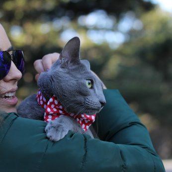 Tikro atsipalaidavimo vertėtų pasimokyti iš kačių murkiančios terapijos žingsniai