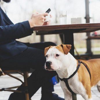 Veterinarijos gydytoja: vedatės šunį į viešą vietą – įsitikinkite, kad jis nepatiria streso