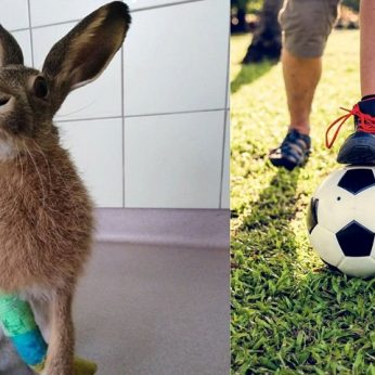 Veterinarus pašiurpino žiaurumas: vaikai kiškelį spardė tarsi futbolo kamuolį