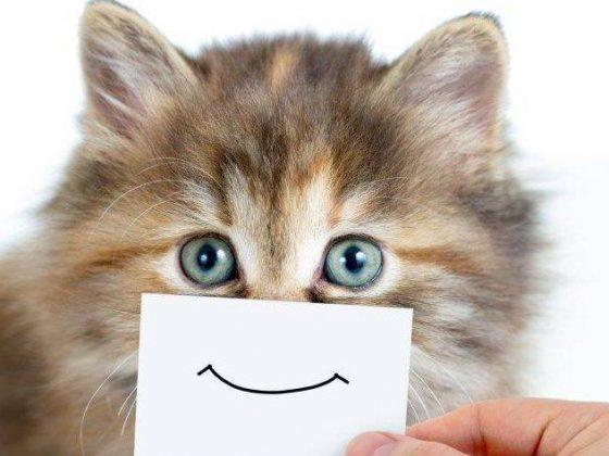 Visą mėnesį - nuo rugpjūčio 13 iki rugsėjo 13 dienos apsilankę Santakos veterinarijos klinikoje su savo mylimu katinuku vakcinacijai, gausite nuolaidą kompleksinei vakcinai.