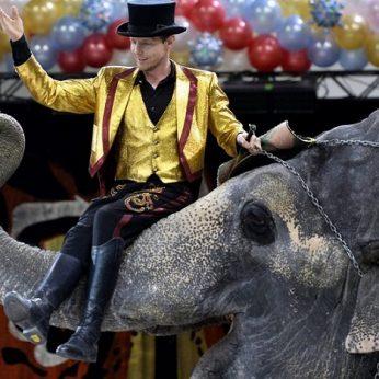 Vyriausybė siūlo drausti gyvūnų pasirodymus cirke