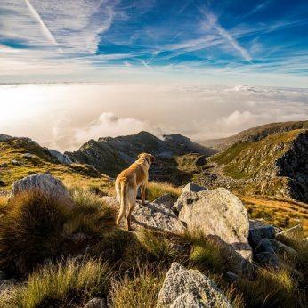 Šunų savininkai Norvegijoje sunerimę dėl plintančių augintiniams pavojingų infekcijų