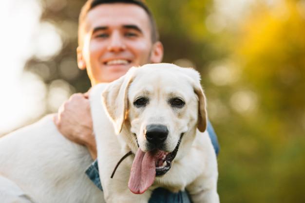 Šunų veislės: Auksaspalvis retriveris ( Golden Retriever )