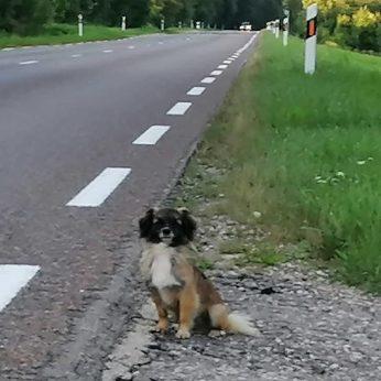 Šuniška ištikimybės istorija: šeimininkų išmestas šuo jų ištikimai laukia šalikelėje