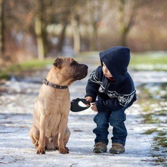Ar šuo savo protu gali prilygti žmogui