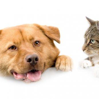 Ar katei tinka šuns kraujas?
