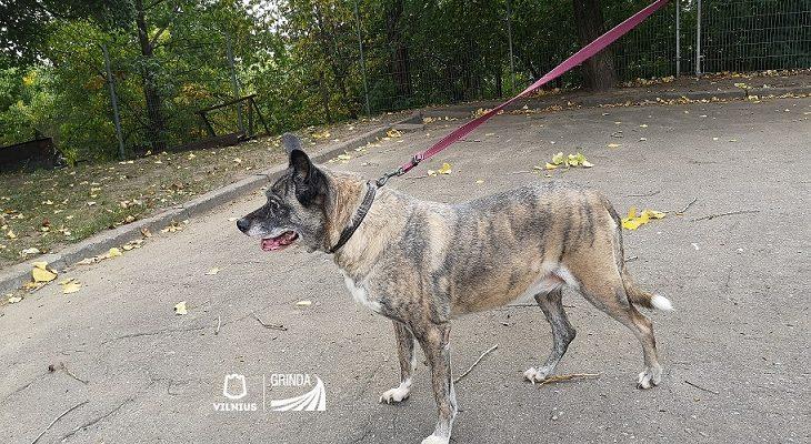 Gyvūnų nepriežiūros atvejis: du šunys nebuvo vedami į lauką, gamtinius reikalus atlikdavo bute