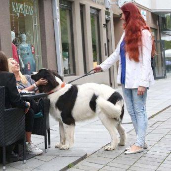 Kaunietė nusiminusi pasakė, su kokia problema susiduria įspūdingo dydžio šunų šeimininkai