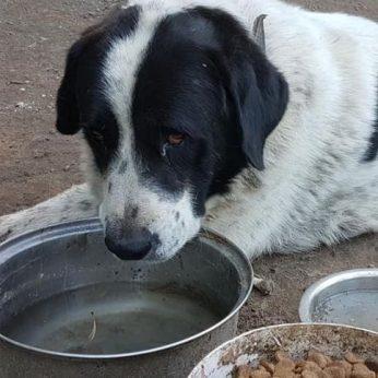 Kraupus elgesys su gyvūnais: vienas nuodytas vaistais, kitas galimai nužudytas