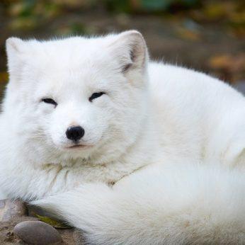 Kuris pasaulio gyvūnas turi daugiausia plaukų?