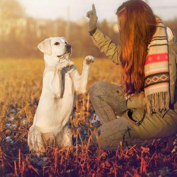 Norite, kad gyvūnas būtų paklusnus – 3 svarbiausi dalykai, kurių turite jį išmokyti